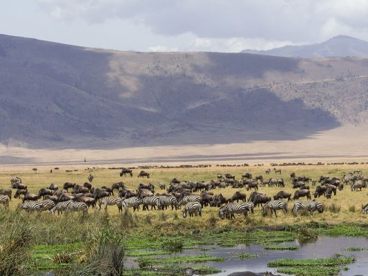 Tansania Safari Ngorongoro Crater