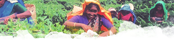 themenbild-bauerin-indien